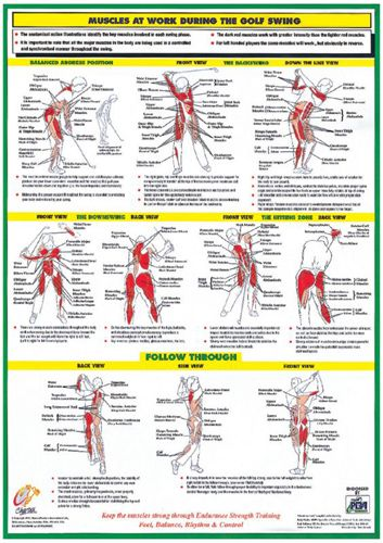 The Golf Swing MUSCLES AT WORK Instructional Wall Chart Poster - Golfing Fitness - Available at www.sportsposterwarehouse.com