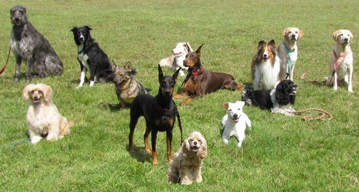 Here are five findings from a massive study of dog breed genomes.