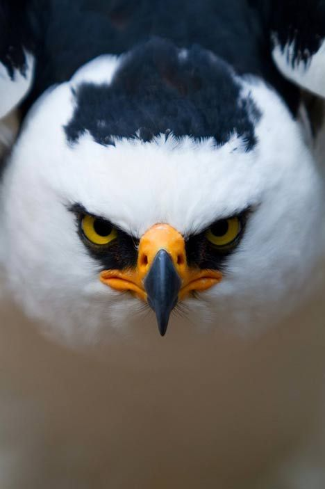 This is so awesome. Angry Bird.