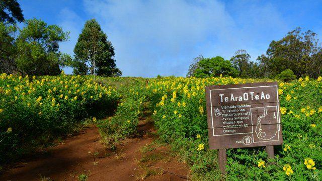Entrada al camino que conduce al volcán Rano Kau