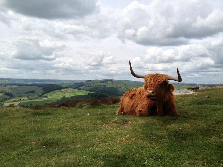 Just a god damn cow (bos taurus) doing cow stuff. [OC] [3264x2448]