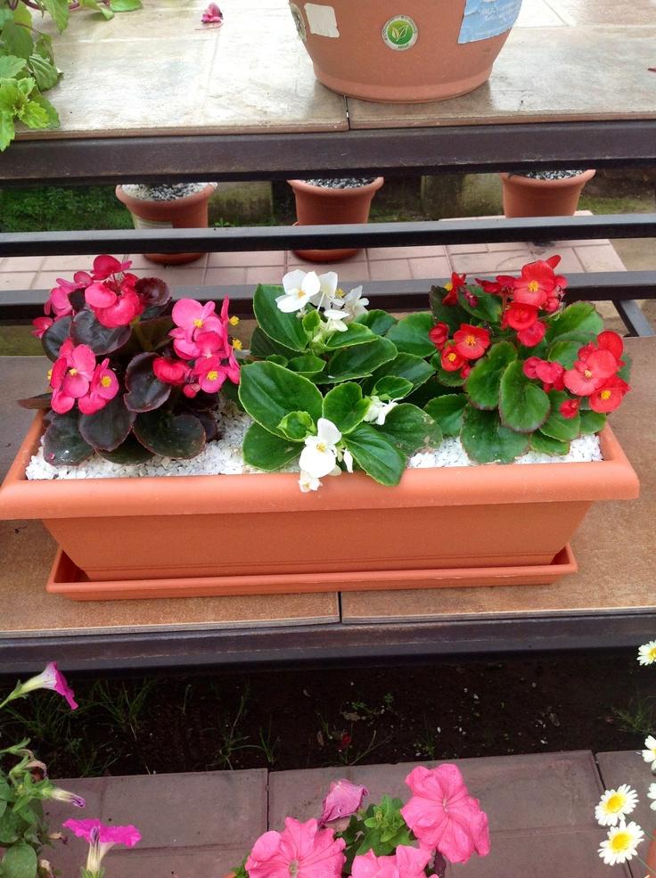 Jardinera ideal para ventana o corredor nuestras - Plantas para jardineras ...