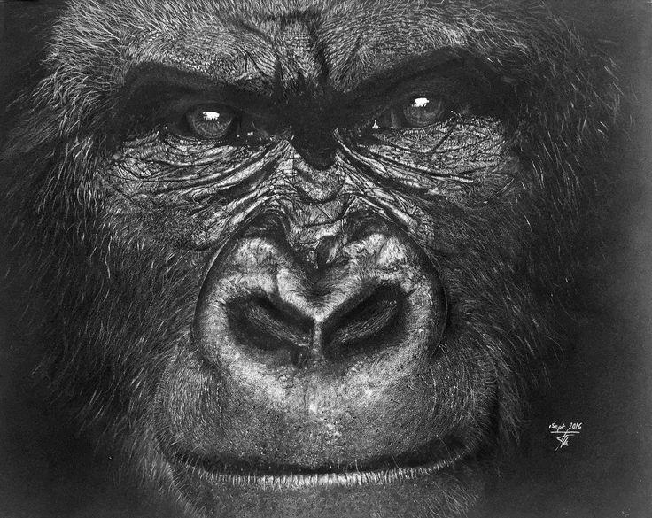 """Dessin d'un gorille de montagne au crayon blanc sur papier noir format 49 x 39 cm  Un animal de plus qui est malheureusement en danger. C'est une espèce protégée, mais les braconniers sévissent encore. Certains se souviendront du film """"Gorilles dans la brume"""", tournage sur la base de l'histoire réelle de Diane Fossey. Vouant sa vie à la protection des gorilles, elle est morte assassinée le 26 décembre 1985 dans des circonstances restées mystérieuses"""