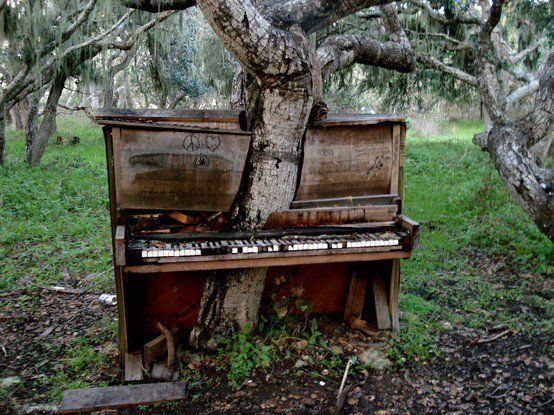 in the end, she will always gets her way.: Wood, Monterey California, Trees Houses, The Piano,  Upright Piano, Old Piano, Photo, Mothers Natural, Piano Trees