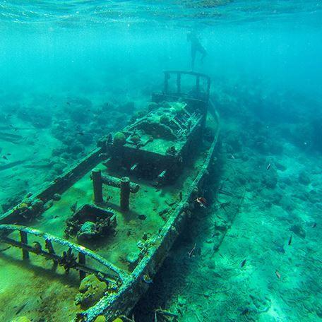 Aruba et Bonaire sont toutes deux connues pour être des petits paradis des plongeurs, mais l'île de Curaçao est tout aussi belle. Un grand nombre des meilleurs sites de Curaçao sont très facilement accessibles ; la barrière de corail est très proche de la côte et se trouve à seulement quelques brasses de la plage. Il ne vous reste plus qu'à mettre vos masque et tuba ou apporter votre bouteille d'oxygène, et plonger dans la mer des Caraïbes pour explorer l'étonnant monde sous-marin de Curaçao…
