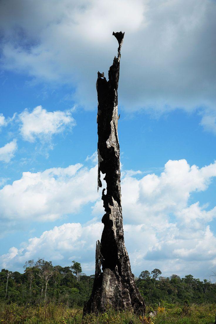 FLORESTA SEM FIM | tudo sobre desmatamento zero