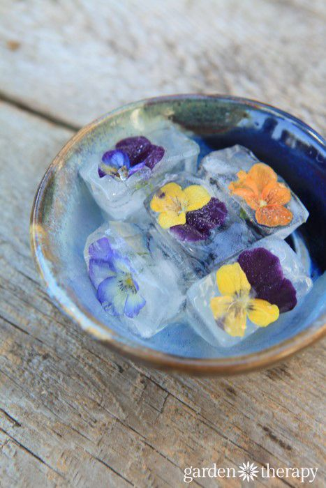 Make these edible flower ice cubes for guests - they even taste a bit sweet!