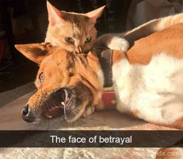 doggo got betrayed | TrendUso    #dog #dogs #betrayal #cat #cats #funny