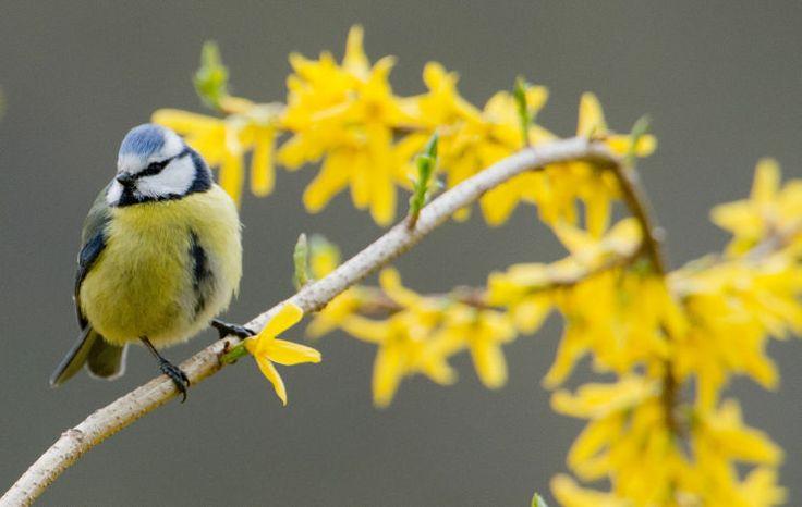 Langsam wachen Wildtiere aus dem Winterschlaf auf - Der milde Frühling macht Eichkätzchen, Igel, Dachs und sogar Siebenschläfer munter. Auch für viele Vögel ist das Wetter günstig. Mehr dazu hier: http://www.nachrichten.at/freizeit/haus_garten/Langsam-wachen-Wildtiere-aus-dem-Winterschlaf-auf;art123,1314602 (Bild: colourbox.de)