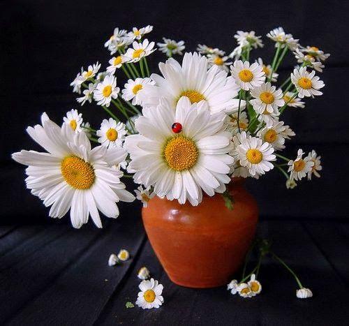 садовые цветы: Уходит лето...
