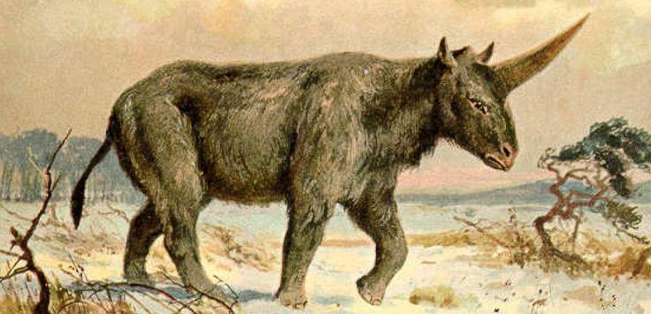 Voici une reconstitution datant de 1920, peignant Elasmotherium sibiricum plus comme une licorne qu'un rhinocéros. © Heinrich Harder / Public Domain