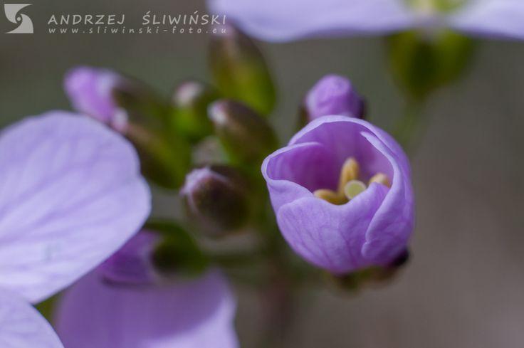 Little violet flower.  #macrophotography