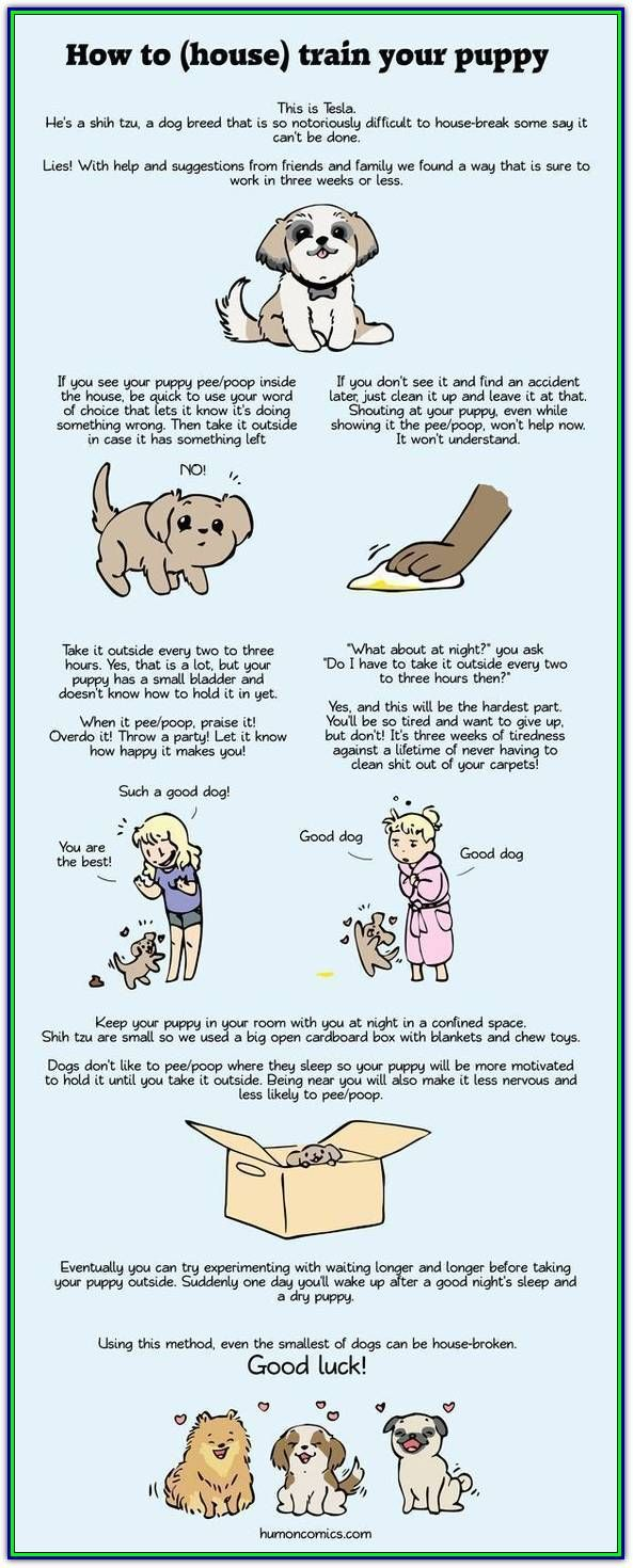 Dog Training Space Top News