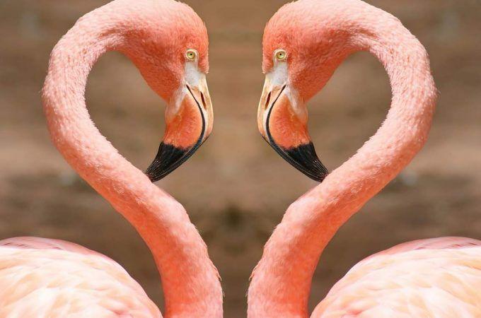 即効性のある恋愛成就の待ち受け②フラミンゴの待ち受け