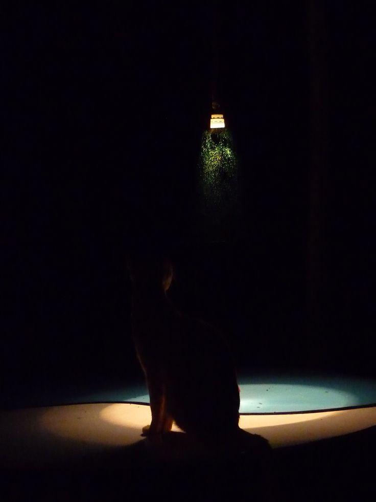 cat silhouette spotlig...