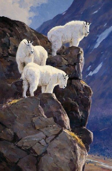 High Point - Mountain Goats - Ken Carlson: