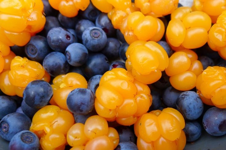 Blueberries and cloudberries