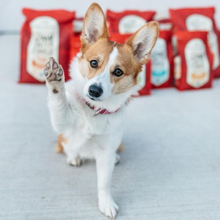 Raw Coated Kibble Food Animals Kibble Pets