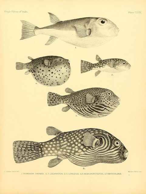 Fishes of India