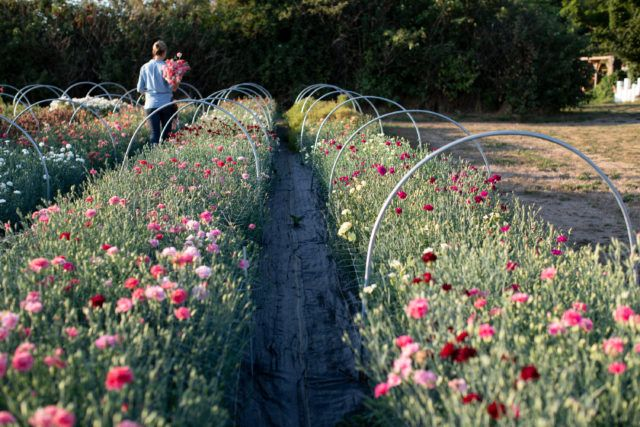 Pin On Flower Farming