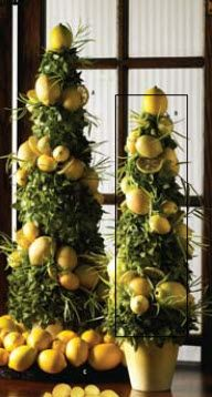 Amazing Small And Large Lemon Tree Topiary By Ku0026K Interiors