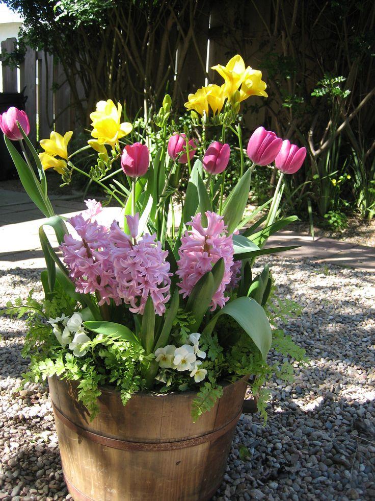 Pin by regina mac on gardening pinterest for Spring bulb garden designs