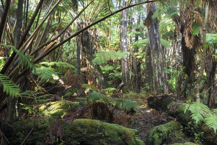 rainforest_jungle.jpg (3000×2008)