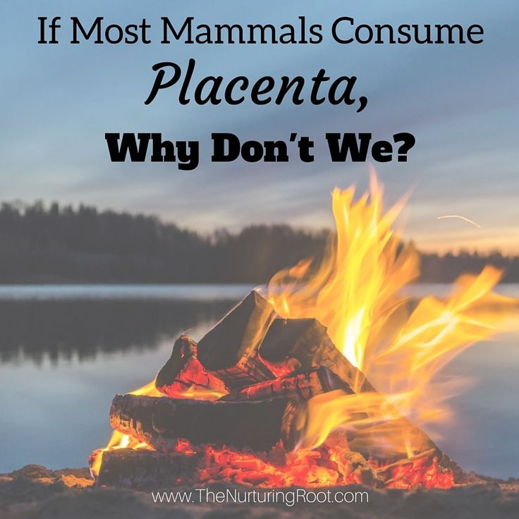 All mammals, with the exception of humans and a few other species, consume their afterbirth. Why don't humans eat placenta?