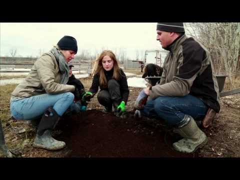 Plantation framboisier - YouTube