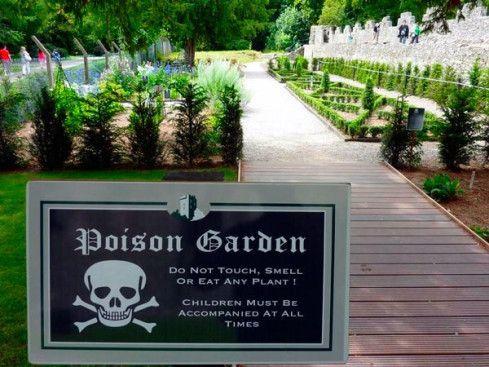 """Boa noite amigos plantadores! 💚  Há um jardim bem incomum na cidade Alnwick, no Norte da Inglaterra. Diferente da maioria dos jardins que encontramos espalhados pelo mundo, este """"diferentão"""" é totalmente voltado as espécies mais perigosas que existem. Nele encontram-se mais de 100 espécies de plantas venenosas. O Poison Garden é cercado por muros e grades e, logo na entrada, um quadro adverte os visitantes com os dizeres """"Essas plantas podem matar"""". Até mesmo os funcionários do local…"""