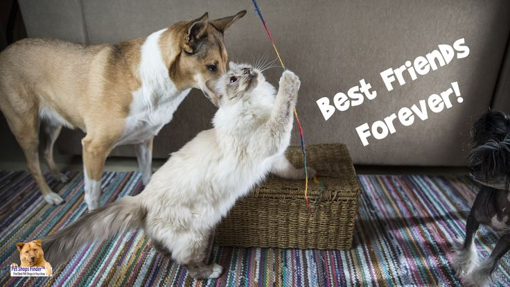 #BestFriendsForever #Pets #Animals #DogsOfTwitter #Dogs #Cats