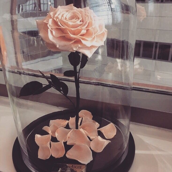 Peach rose is a glass vase! Beauty & the beast inspired ♡