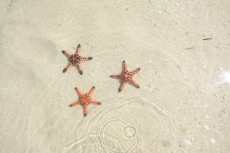 Starfish Island  Puerto Princesa Palawan Honda Bay ☀️