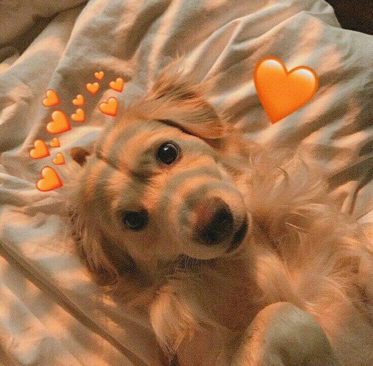 Puppy Wallpaper Cute Puppy Wallpaper Cute Cute Dog Wallpaper Cute Puppy Wallpaper Cute Animals