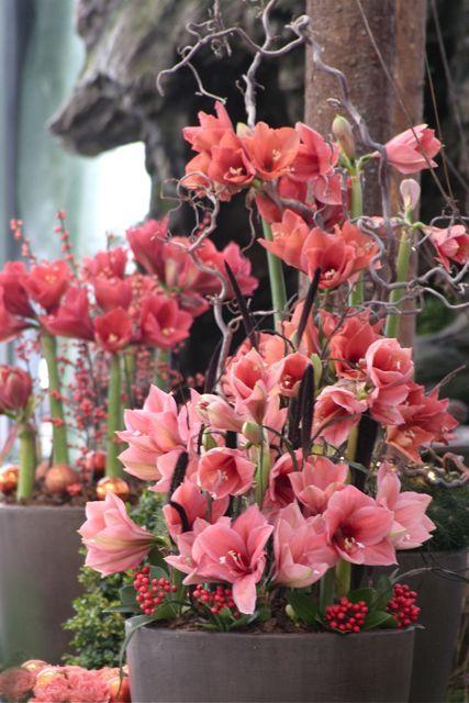 Beautiful arrangement: Flowers Gardens, Beautiful Arrangements, Pink Flowers, Beautiful Bloom, Fleur Flowers, Color, Beautiful Flowers, Floral Arrangements, Amarylli Flowers