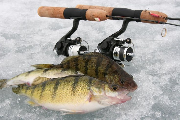 how to find perch ice fishing