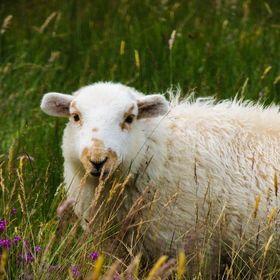 B-Lamb :) / 500px