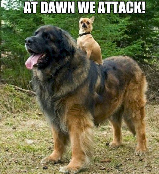 Cutie & Funny Pet Pictures -
