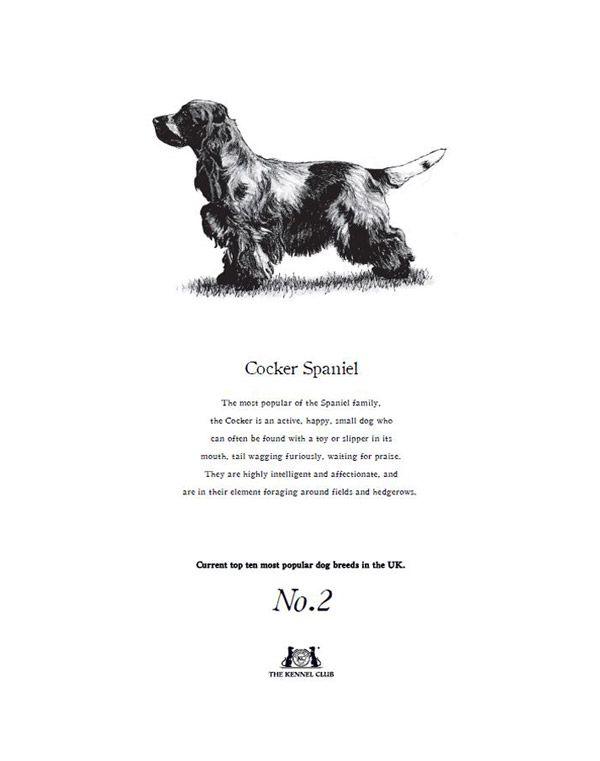 Cocker Spaniel Tea Towel The Kennel Club Official Shop