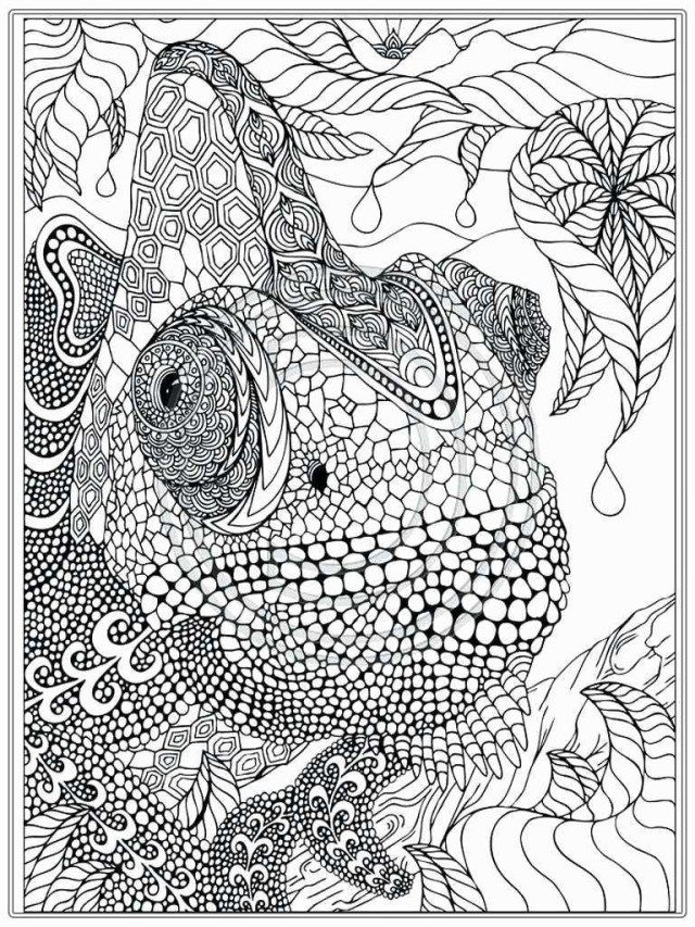 25 Creative Photo Of Jungle Coloring Pages Animal Coloring