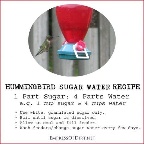 Recipe for making hummingbird sugar water