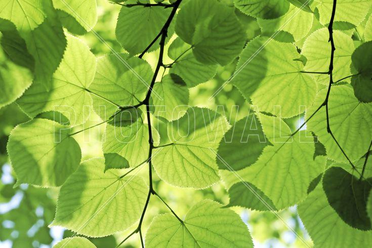 Glowing Leaves - Fototapeter & Tapeter - Photowall
