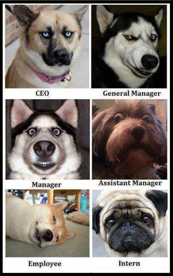 Does your GM have this look? Or, your manager? :) I love interns :)