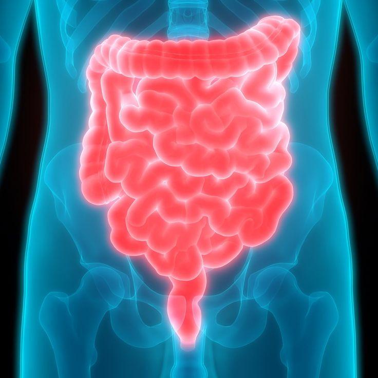 Dentro de nuestro sistema digestivo, existen una parte en la que se extraen parte de los nutrientes de los alimentos que ingerimos durante las comidas. Esta parte la forman los intestinos.