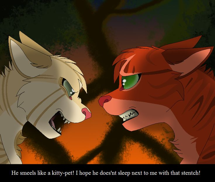 """Who Dies In Warriors Fire And Ice: """"He Smells Like A Kittypet."""" Sandpaw And Firepaw Meet"""