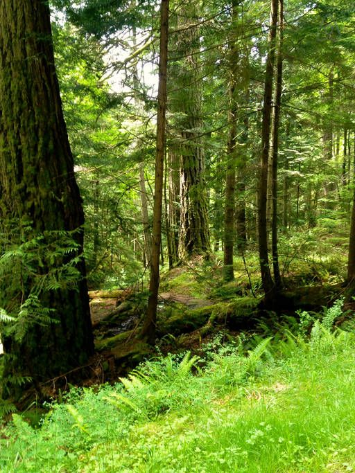 Parque Estadual Moran, em Olga, ilha Orcas, arquipélago das ilhas San Juan, Washington, USA.