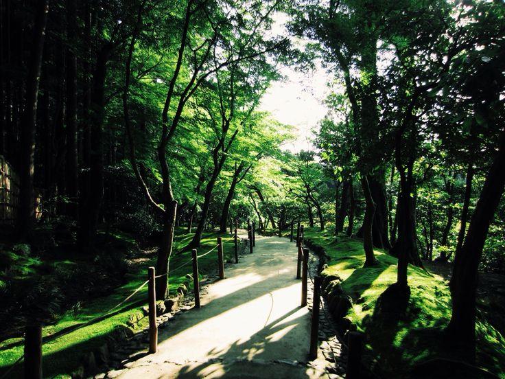 Pathway through nature