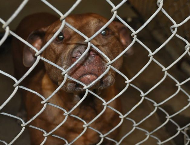 20 Best Cats Dogs Ga Clayton County Animal Control Jonesboro Ga Images On Pinterest