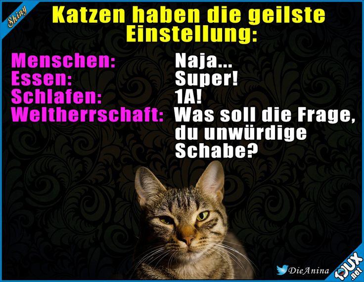 Ich will auch eine Katze sein! #Katze #Katzen #Katzenliebe #sowahr #Sprüche #lustiges #Humor #lachen
