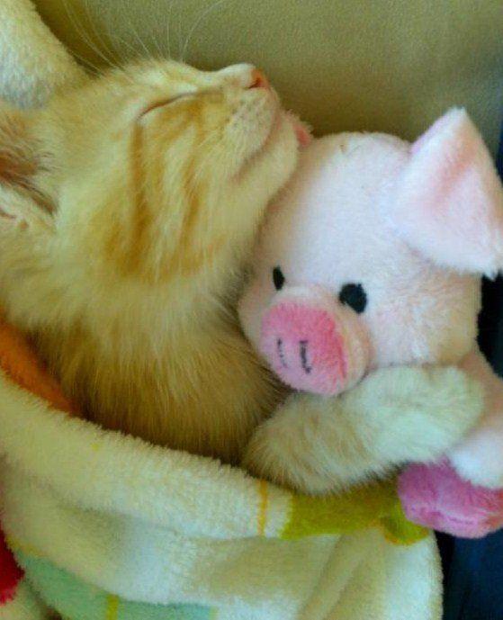 piggyKitty Cat, Favorite Things, Things Feline, D Awwww, Sweets Dreams, Cat Naps, Adorable Things, Kittens Cuddling, Animal